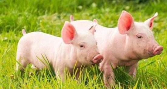 养猪场征收补偿纠纷